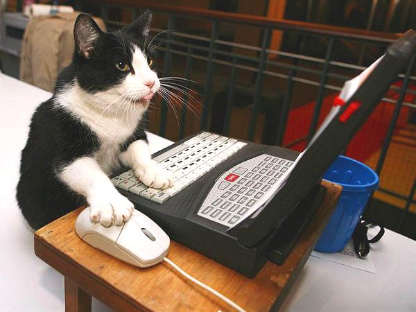20032012: Premio ignobel 2000 verificare se un gatto ha camminato sulla mia tastiera