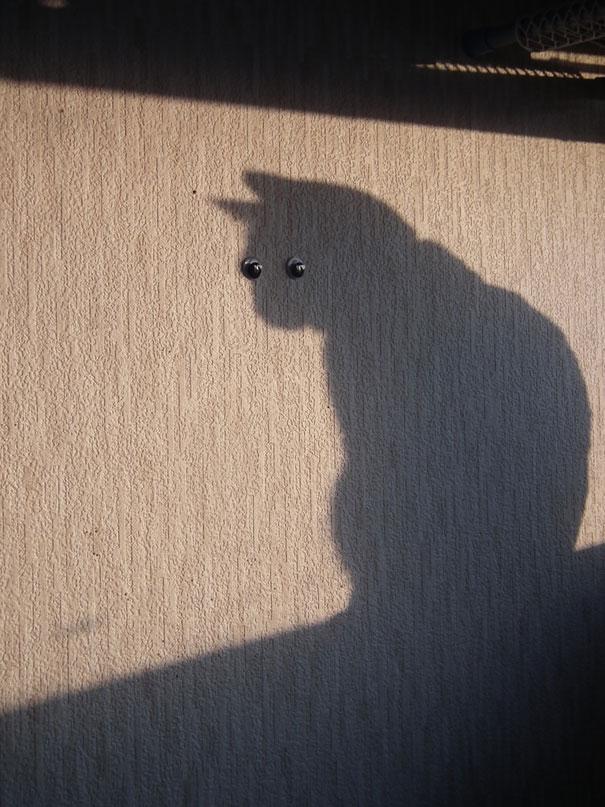 01102012: Foto fatte nell'attimo perfetto Gatto