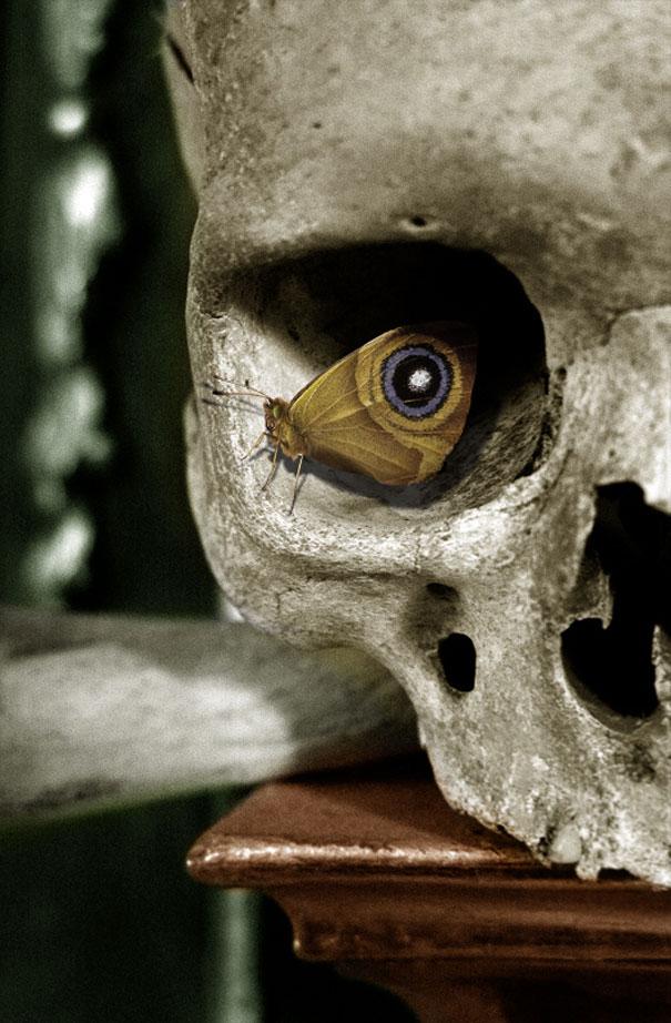 25102012: Foto fatte nell'attimo perfetto: L'occhio della…farfalla